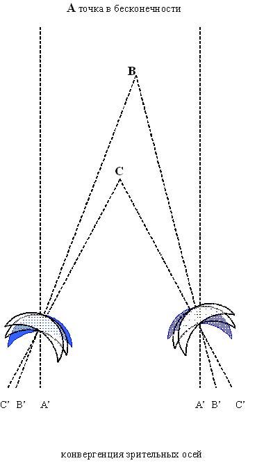 Конвергенция зрительных осей